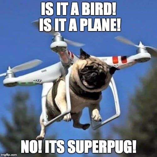 super pug flying time